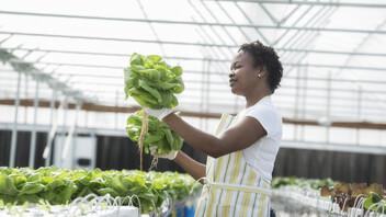 Woman working in greenhouse. GRODAN, Green, Horticulture.