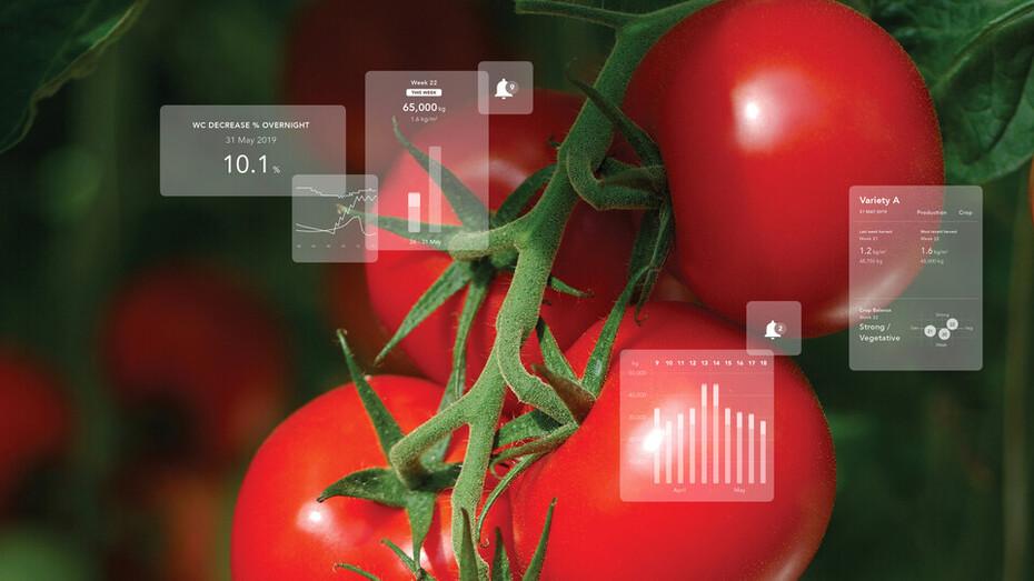 egro, e-gro, grodan, tomato
