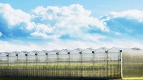 egro, e-gro, grodan, commercial, stills, stil, greenhouse, data layer