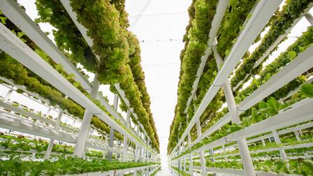 Vertical Farming Picture